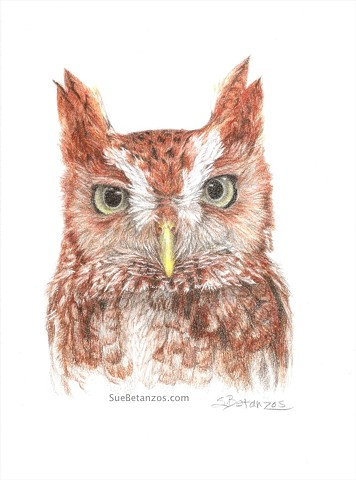 Screech owl, owl art, eastern screech owl, bird art, suebetanzos, colored pencil owl, colored pencil art, polychromos