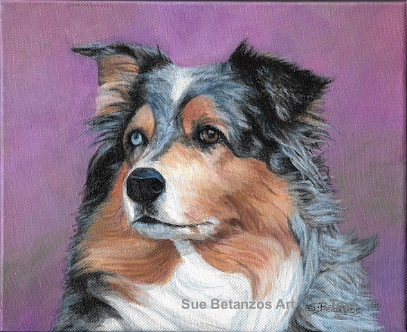 Australian Shepherd canvas pet portrait, pet portraits, custom pet portrait, Australian Shepherd pet portrait, Australian Shepherd rescue, Sue Betanzos, pet portrait, acrylic portrait, dog portrait, Australian Shepherd portrait