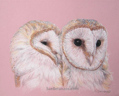 Barn Owl, colored pencil, Sue Betanzos, barn owl art, animal art, raptor art, colored pencil, suebetanzos design, animal artist, owl art