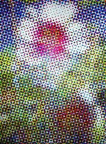 Geranium maculatum (Cranesbill)