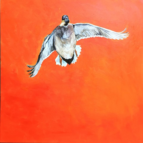 Orange Duck Mallard Animal Art Painting by Artist Katherine McClure