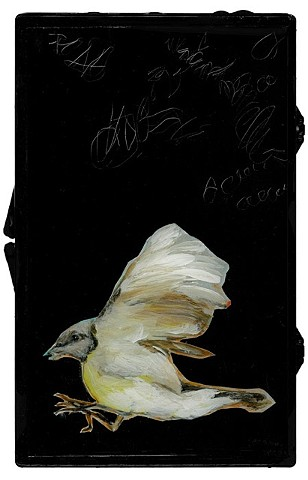 mixed media bird paintings by Katherine Bell McClure
