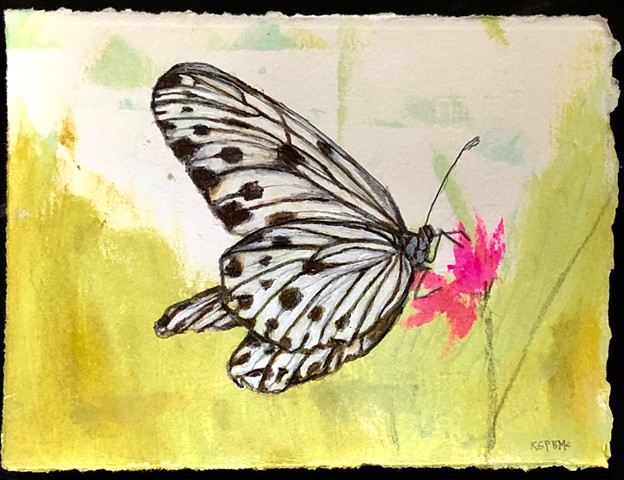 Black and White Butterfly painting on paper by Katherine Bell McClure