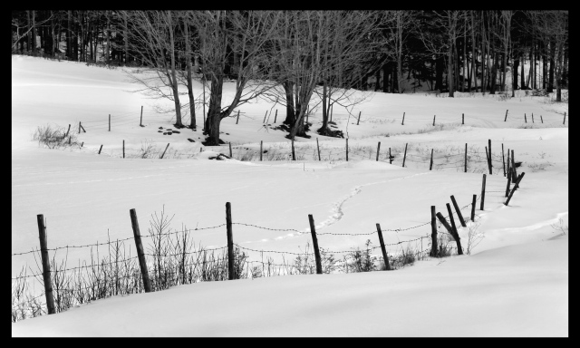 Snowy Pasture ~ Shelburne, Massachusetts