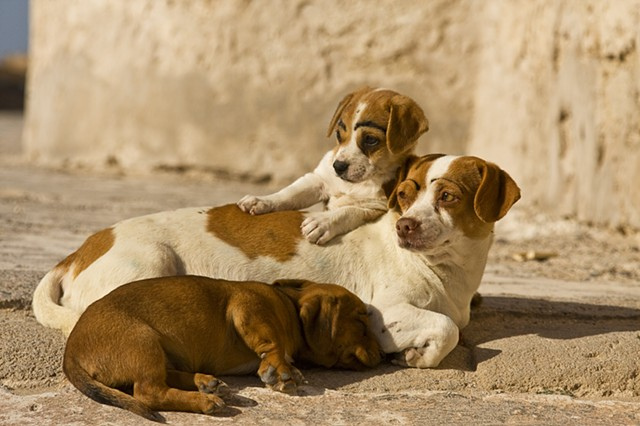 Street Dogs ~ Morocco