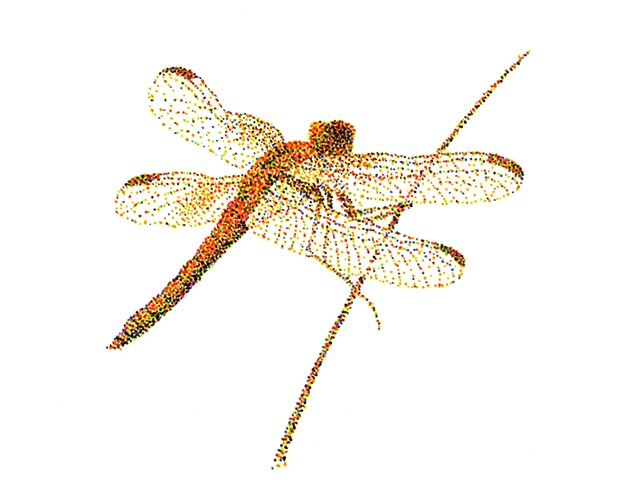 Dragonfly 7