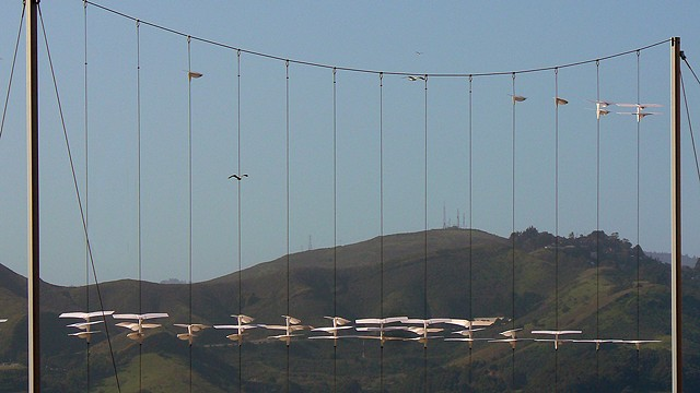 exhibit installation, 'Outdoor Exploratorium' exhibit, Fort Mason, SF.  Exploratorium Museum of Science and Perception the gliders catch the wind and travel up and down the cables, showing air currents. Developed by Maz Katua)