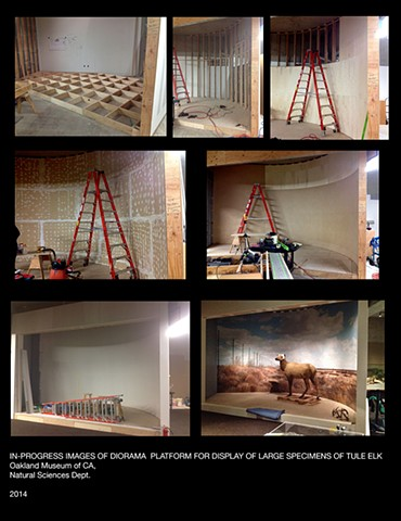 Tule elk Exhibit progress, Oakland Museum