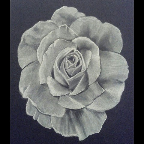 All Rights Reserved By Shauna Fujikawa Hope Tattoos & Art - White Charcoal Rose