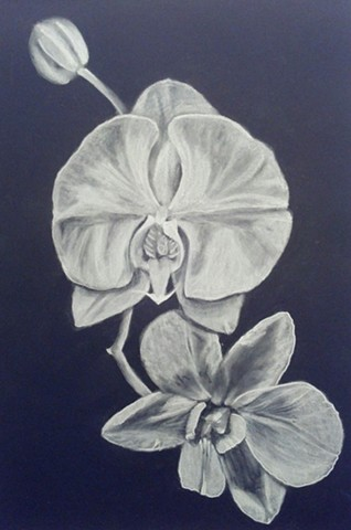 All Rights Reserved By Shauna Fujikawa Hope Tattoos & Art - White Orchids