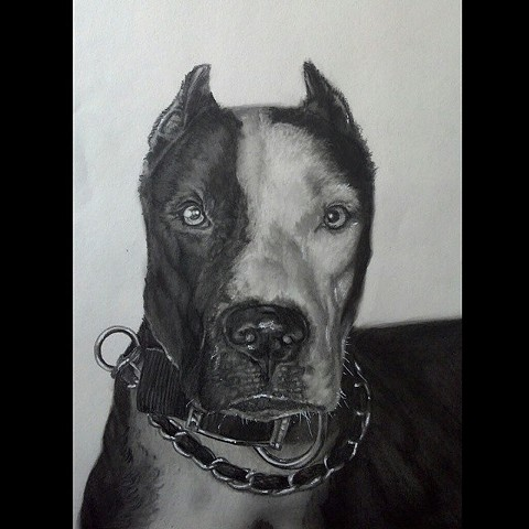All Rights Reserved By Shauna Fujikawa Hope Tattoos and Art - Mr.Cholo My Pit Bull