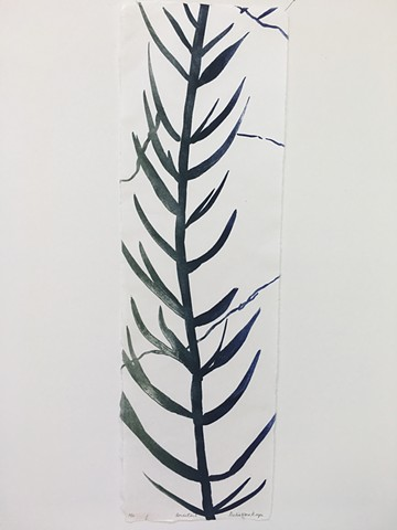 """Horsetail. 20 of the series """"Fossilized"""""""