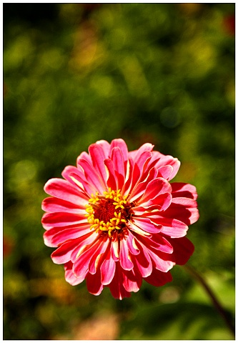 Flower, flowers, new orleans, flower photography, Crystal Shelton Photgraphy, Crystal Shelton, Pink Flower, Pink