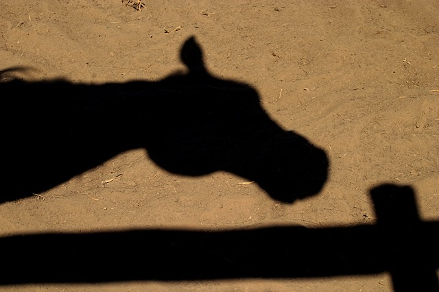 """Horse's Shadow"""