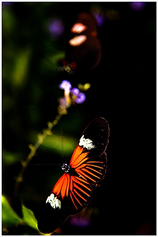 Butterflies, Butterfly, insects, insectarium, NOLA, NOLA insectarium, bugs, Crystal Shelton, Crystal Shelton Photography