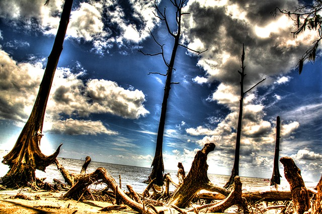 HDR Photography, New Orleans, Louisiana, cypress trees, Fontainebleau, lake Pontchartrain, Mandeville, Covington