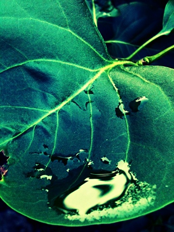 art margaux, maggie wolszczan, watre pool leaf, nature photography