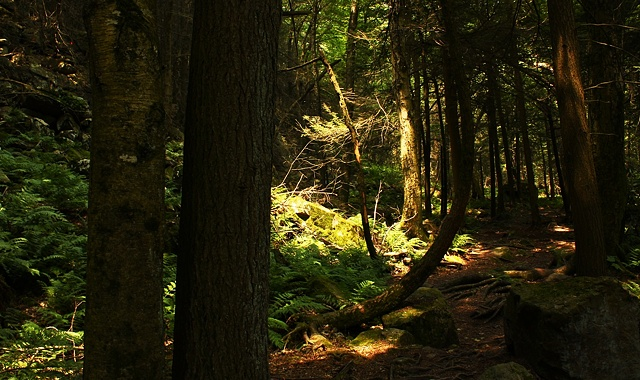 Tussey Mountain forest, state college, art margaux, maggie wolszczan, nature photography