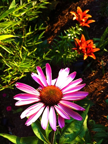 nature photography, art margaux, maggie wolszczan art, leaves, summer image, echinacea