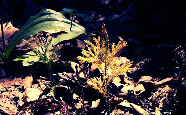 Forest foliage, golden, sunshine, maggie wolszczan, art margaux, photography, nature