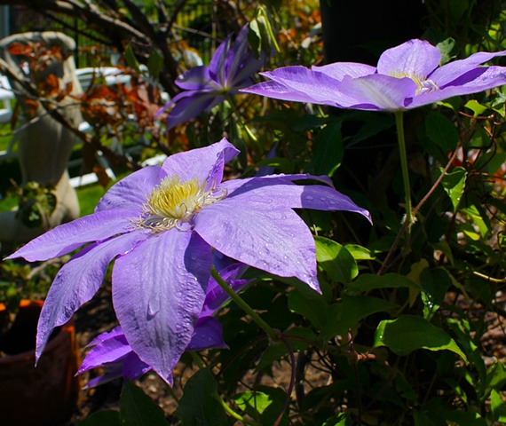 maggie wolszczan, art margaux, purple flowers, floral, nature photography, garden