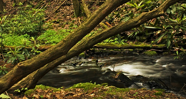Tussey mountain stream, forest, nature phtotgraphy, maggie wolszczan, art margaux