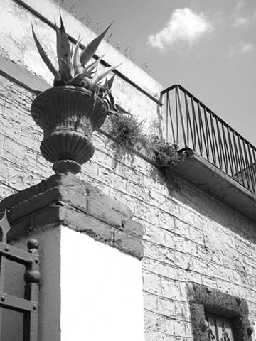 Aloe Vera, Cinque Terre