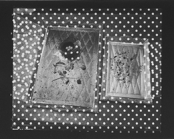Still Life with Photogram #8