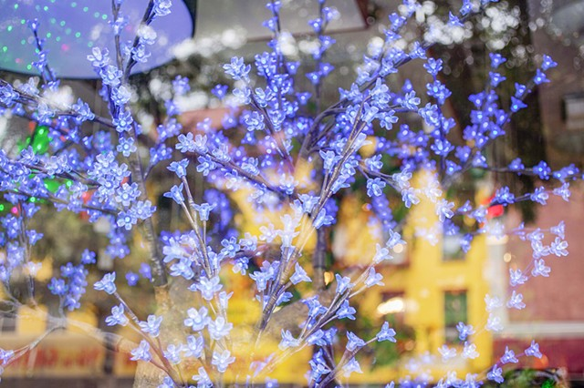 Blue Tree Lights, Bowery Window