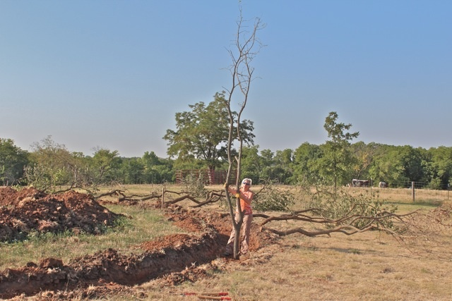 Project Foreman, Mindy Graham, holds first branch in place