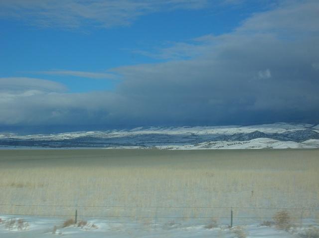 Winter Wheat, Encampment, WY