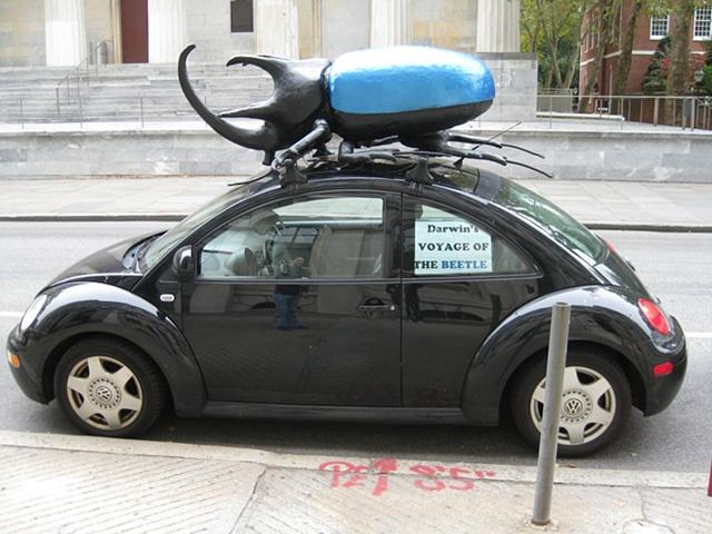 """Norman Stuby"", ""freelance sculptor"", ""sculptor"", ""Philadelphia"", ""prop artst"",""American Philosophical Society"", ""Darwin's Voyage of the Beetle"""
