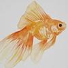 prettyfish