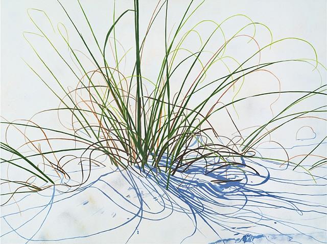 Beach Grass 23