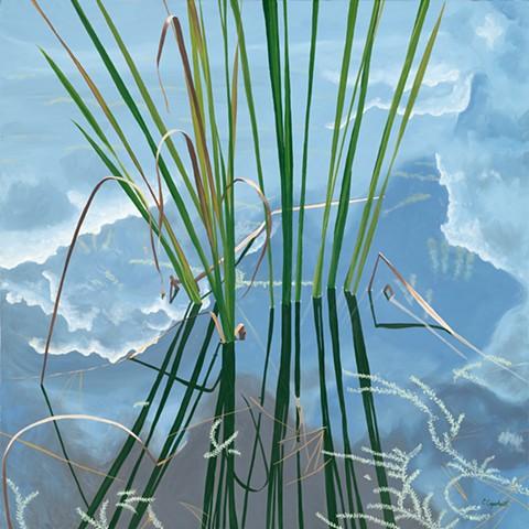 Northwood Pond Grasses 9