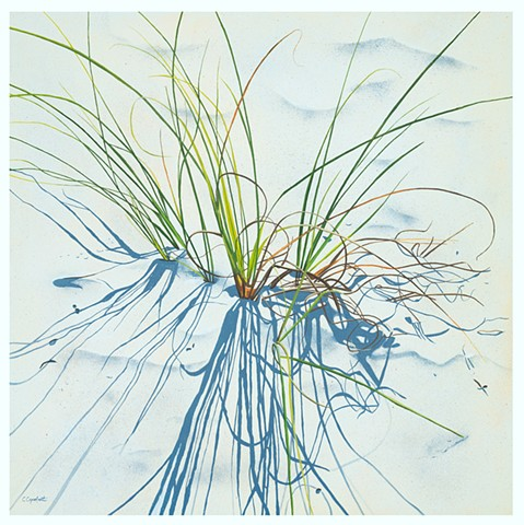 Beach Grass 18