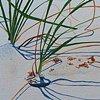 Beach Grass IV