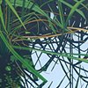 Lake Alice Grasses IX