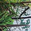 Lake Alice Grasses 8