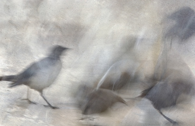 """Bird Series 50"""