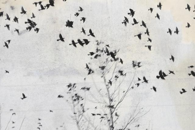 """Bird Series 21"""
