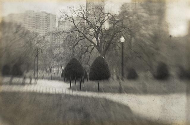 """""""Boston Common and Public Garden 10"""""""