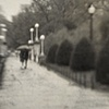"""""""Boston Common and Public Garden 12"""""""
