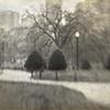 """""""Boston Common and Public Garden"""""""