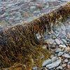 Tide Line: Reclaimation