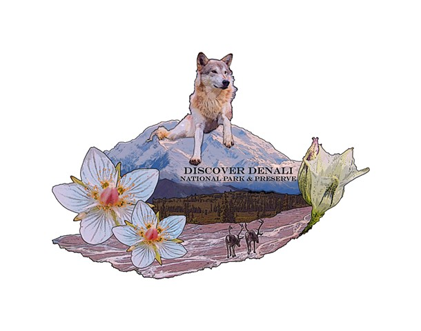 Discover Denali Arctic Flowers and Wolf