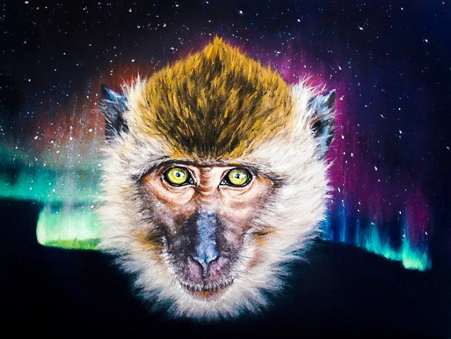 Macaque with Aurora Borealis