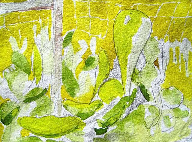cacti amarillo