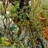Tropic (Tortuguero) Detail 4