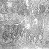 Organic Drawing Detail